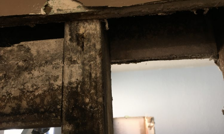 Mold in stud